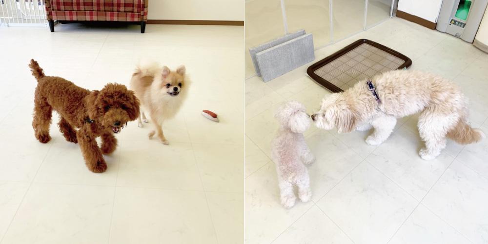 ぴースマイルHana-Tan犬の保育園・お遊びコース