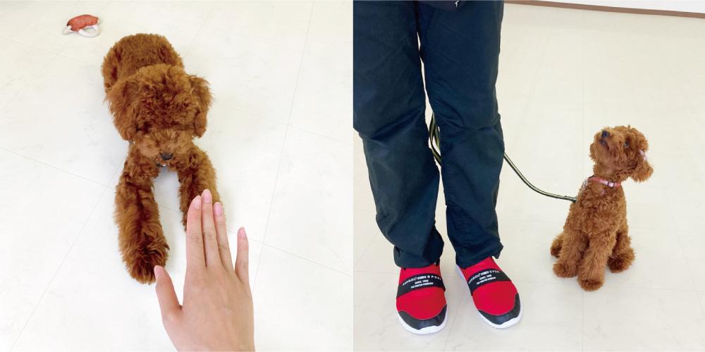 はっぴースマイルHana-Tan犬の幼稚園・基本コース