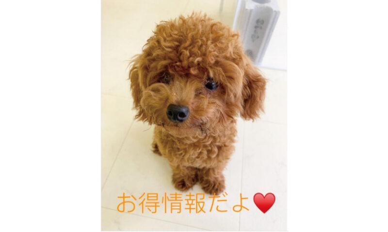 はっぴースマイルHana-Tan犬の保育園キャンペーン