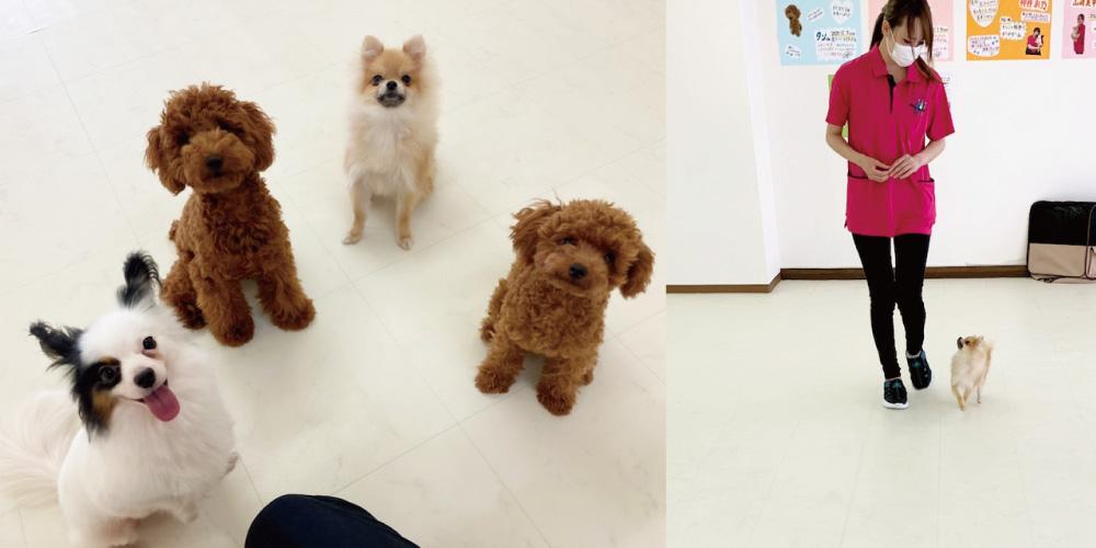 はっぴースマイルHana-Tan犬の保育園体験入園