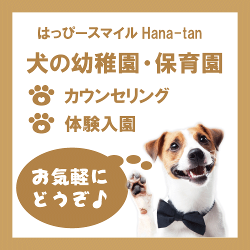 Hana-tan幼稚園・保育園体験入園