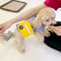 犬の保育園・幼稚園・9月の体験入園キャンペーン