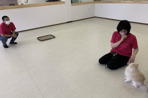 犬の保育園・幼稚園