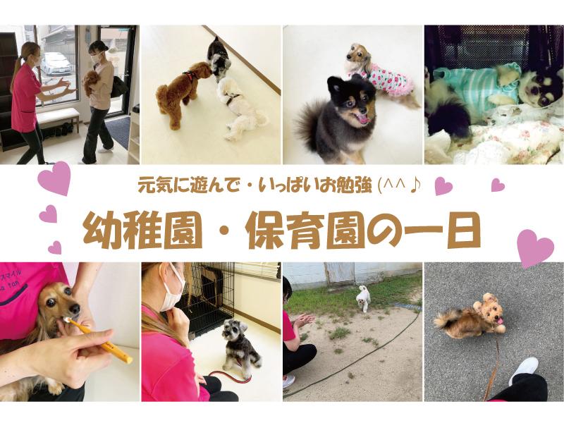犬の幼稚園・犬の保育園の一日